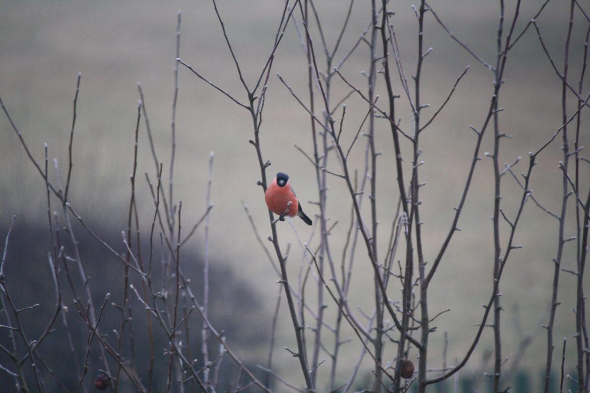Fågelräknardag