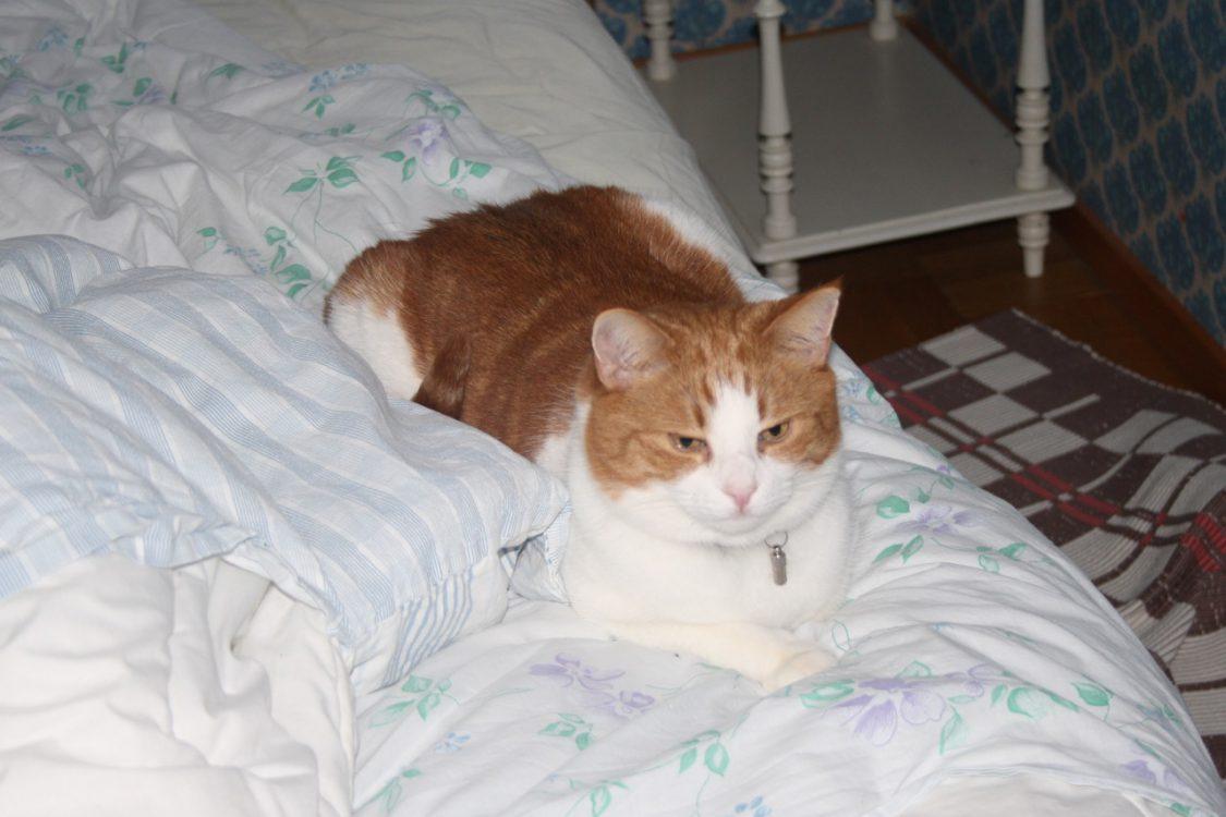 Katt Sam