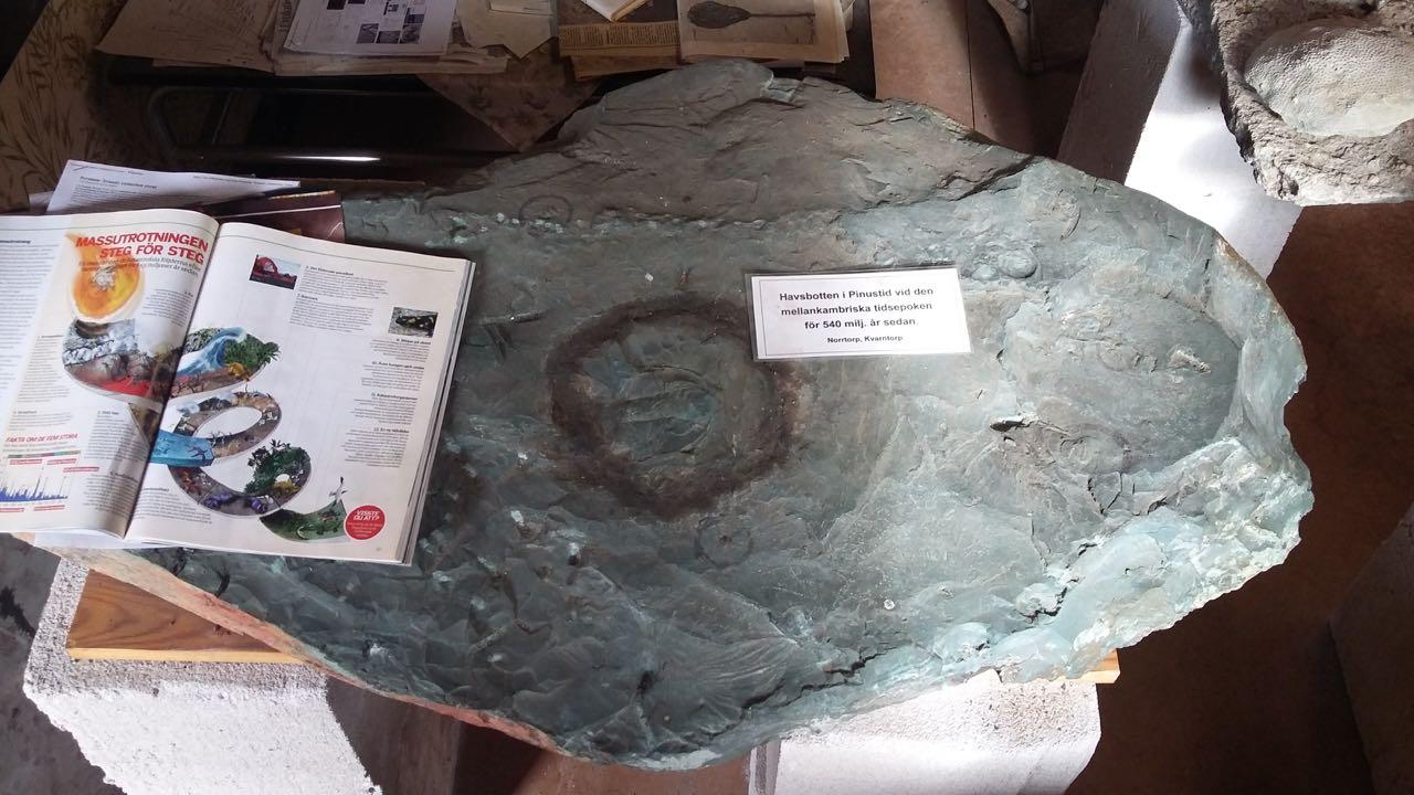 fossilmuseum