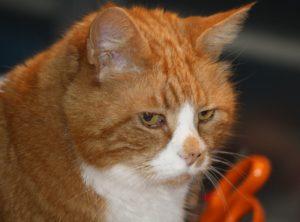 Katten Svante